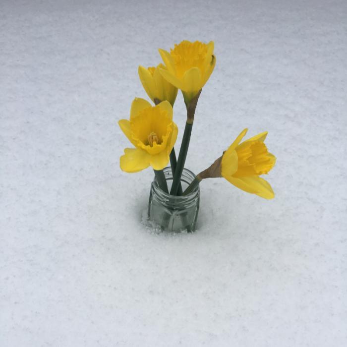 Snow Southgate